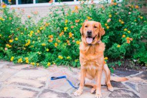 Olivia Dog